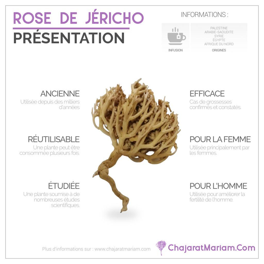 Rose-Jericho-Presentation
